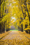 Autumn park. Alley in the autumn park Royalty Free Stock Image