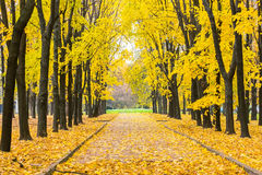 Autumn park Royalty Free Stock Photo