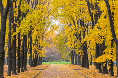 Autumn park. Alley in the autumn park Stock Photography