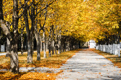 Free Autumn Park Alley Stock Photography - 60114842