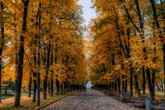 Autumn park alley. Bright autumn trees and orange autumn leaves. People stroll around the park. Autumn background Royalty Free Stock Photography