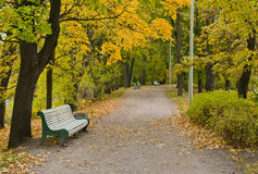 Autumn in the park. Alley in autumn park with a bench. Around the green and yellow trees Royalty Free Stock Photos