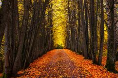 Autumn park alley. Bright autumn trees and orange autumn leaves. Autumn landscape. Yellow autumn trees and fallen autumn leaves on the wet footpath in park royalty free stock photo