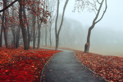 Autumn park alley in dense fog- foggy autumn landscape of lonely alley with bare autumn trees and orange fallen leaves. Royalty Free Stock Images