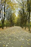 Autumn park alley Royalty Free Stock Photography