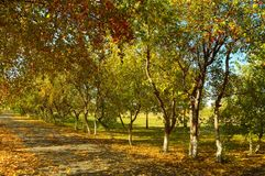 Autumn Park. Alley of golden leaves Royalty Free Stock Images