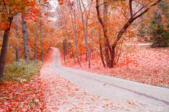 Autumn park alley. Golden leaves and sunlight royalty free stock image