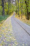 Autumn park alley. Golden leaves and sunlight stock photo