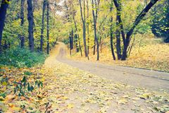 Autumn park alley. Golden leaves and sunlight royalty free stock photography