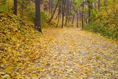Autumn park alley. Golden leaves and sunlight royalty free stock images