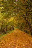 Autumn park alley Royalty Free Stock Image