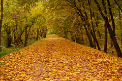 Autumn park alley Royalty Free Stock Photos