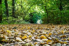 Autumn park alley. Landscape with park alley in autumn royalty free stock photography