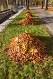 Autumn park alley with leaf pile Stock Photography