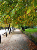 Autumn in the park Stock Image