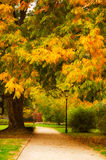 Autumn park with alley Stock Photos