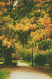 Autumn park with alley Royalty Free Stock Image