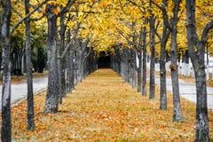 Autumn park alley Stock Photo