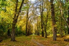 Autumn park. Autumn arboretum. Autumn park. The path in the autumn arboretum Royalty Free Stock Photos
