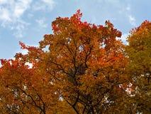 Autumn park. Royalty Free Stock Image