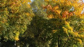 Autumn Park. Beautiful colorful trees in autumn park stock footage