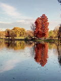 Autumn in the park. Beautiful park with colorful trees and a lake in the autumn season Stock Photos