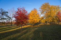 Autumn in the park. Beautiful colors of autumn in the park at sunset Stock Photography