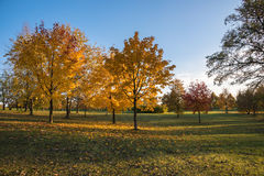 Autumn in the park. Beautiful colors of autumn in the park at sunset Royalty Free Stock Photography