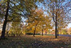 Autumn in the park. Beautiful colors of autumn in the park at sunset Royalty Free Stock Images