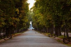 Autumn in the park. A beautiful autumn day in a Romanian park, Cluj-Napoca Stock Photography