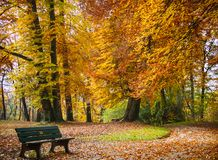 Autumn in the park. Beautiful Gold Foliage Trees with Bench. Calm Scene. royalty free stock photo