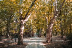 Autumn in the park, beautiful autumn landscape, two trees with golden leaves. Beautiful autumn forest. Fall scene. Autumnal park with colorful leaves and two big stock images