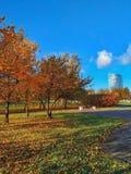In the autumn park stock photo