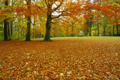 Autumn park with beech trees. Autumn Dalovice park with beech trees in October, Czech Republic stock photography