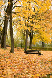 Autumn park with bench Stock Photos