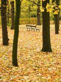 Autumn, Park, Bench. A leafy park in Autumn. Empty Bench Stock Photography