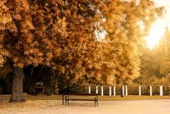 Autumn park. Bench in the autumn park Stock Photography