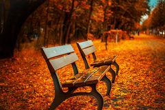 Autumn Park Bench Fall Orange Leave Trail Royalty Free Stock Photography