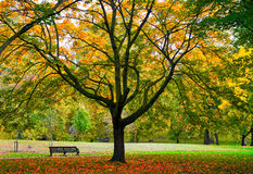 Autumn Park Bench Stock Photo
