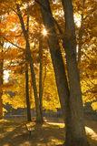 Autumn Park Bench. A park bench under the warm glow of illuminated fall leaves Stock Photos
