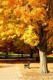 Autumn park. Bench under yellow maple tree Stock Photo