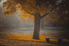 Autumn park. Bench under yellow maple tree Stock Photo