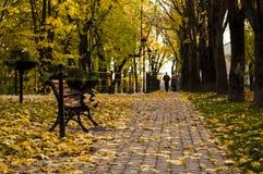 Autumn park. Park bench on a warm autumn day Royalty Free Stock Photos