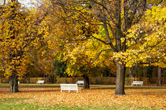Autumn park benches. Golden colorful trees in autumn park with white benches Royalty Free Stock Images