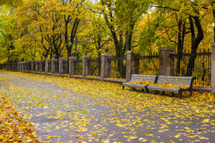 Autumn park with benchesn Stock Photography