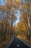 Autumn park. The bicycle road in the autumn park Royalty Free Stock Photography