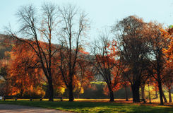 Autumn in the park Royalty Free Stock Images