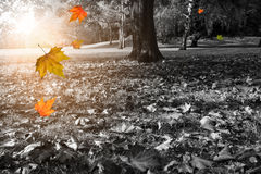 Autumn park in black-and-white Royalty Free Stock Photo