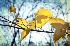 Autumn in park, branch with yellow leaves. Background with trees, blue sky, vignette Stock Photo