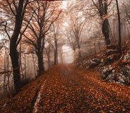Autumn in the park of Campo di Fiori, Varese Royalty Free Stock Photography